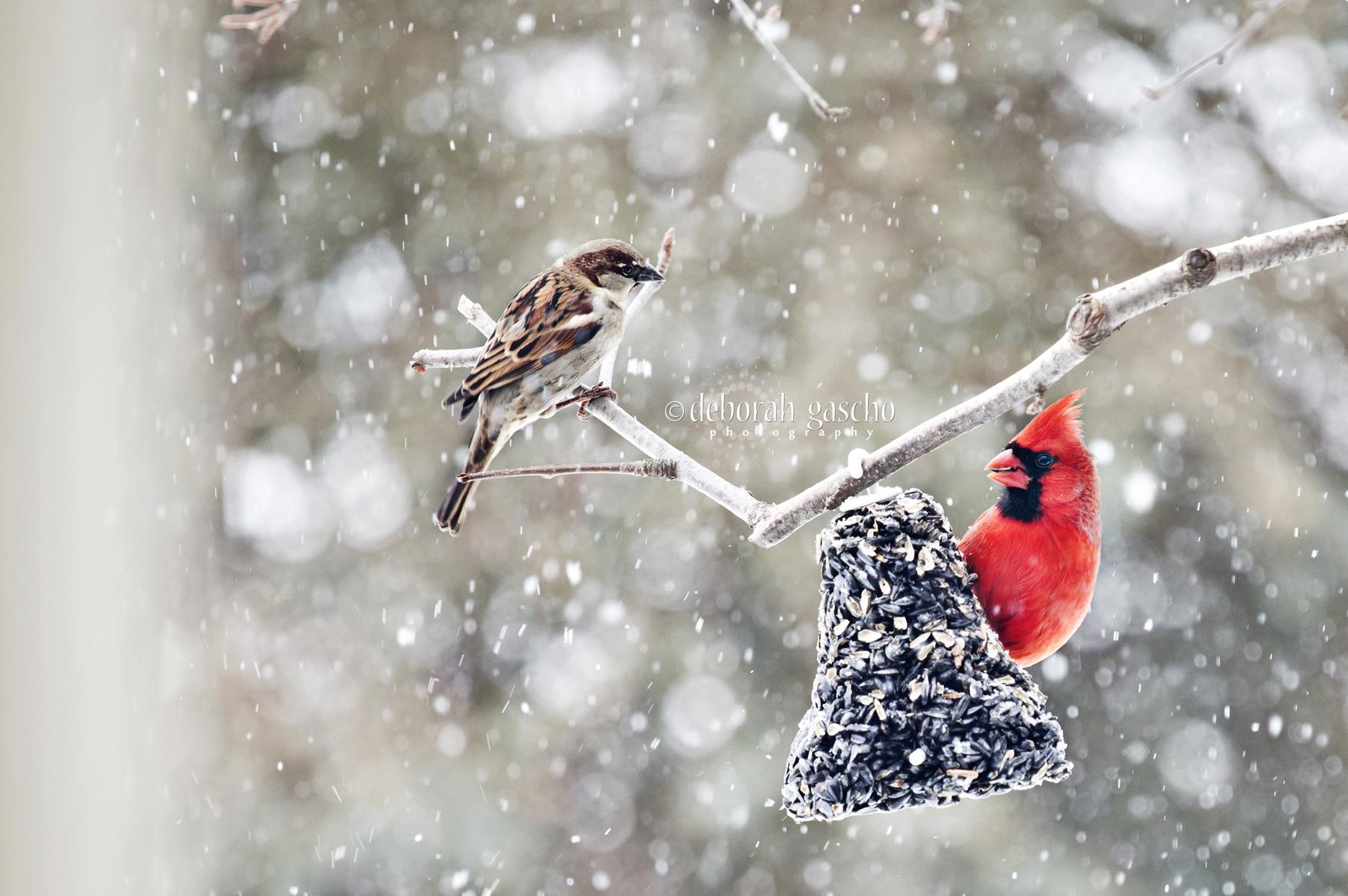 WinterFeast.jpg